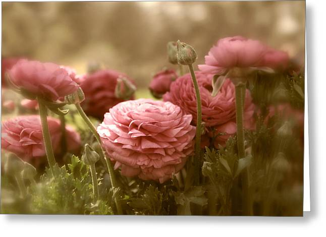 Soft Light Greeting Cards - Ranunculus Greeting Card by Jessica Jenney