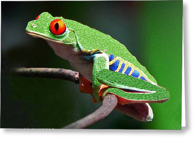 Leaf Frog Greeting Cards - Red-eyed Leaf Frog Greeting Card by Larry Linton