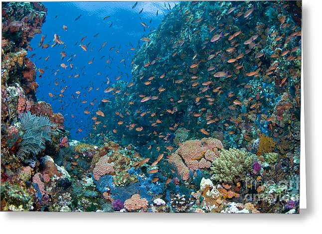 Cnidaria Greeting Cards - Reef Scene With Corals And Fish Greeting Card by Mathieu Meur