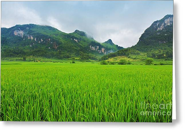 Indochina Greeting Cards - Rice field Greeting Card by MotHaiBaPhoto Prints