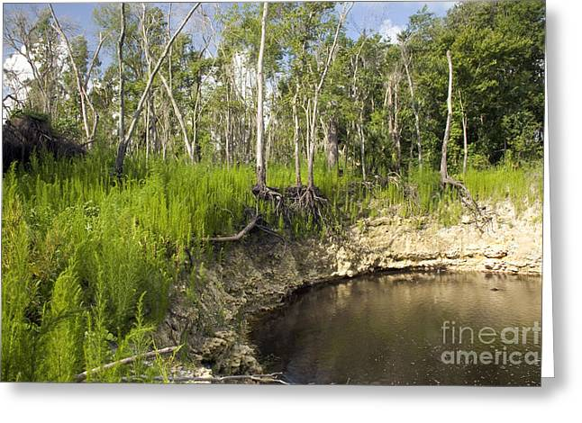 Sink Holes Greeting Cards - Sinkhole, Florida Greeting Card by Inga Spence