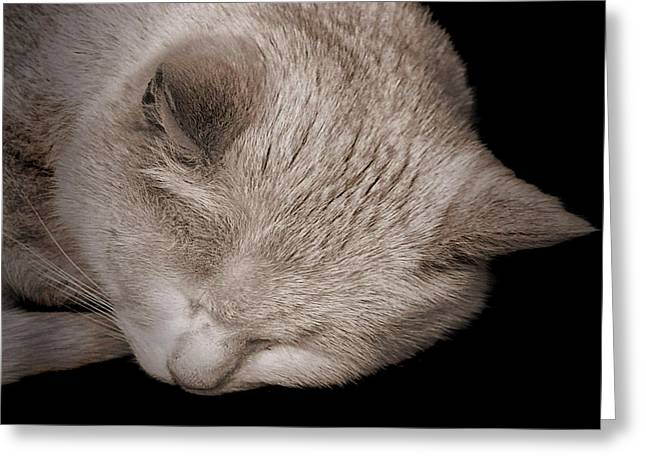 Sleeping Cat Greeting Card by Martin Newman
