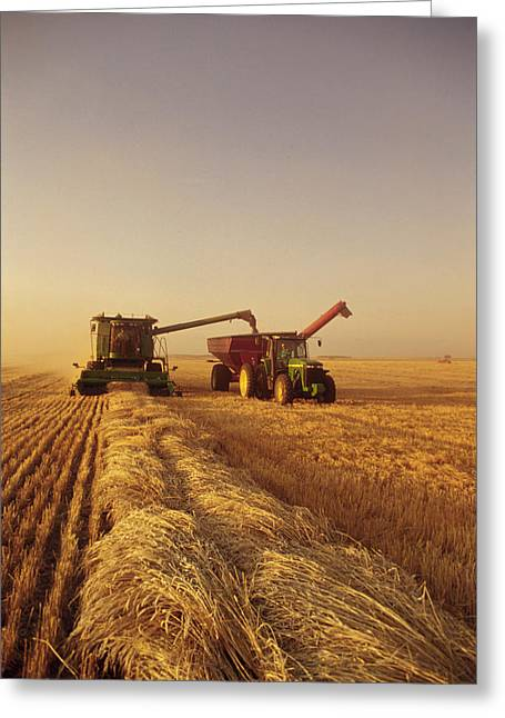 Reaping Greeting Cards - Spring Wheat Harvest, Tiger Hills Greeting Card by Dave Reede