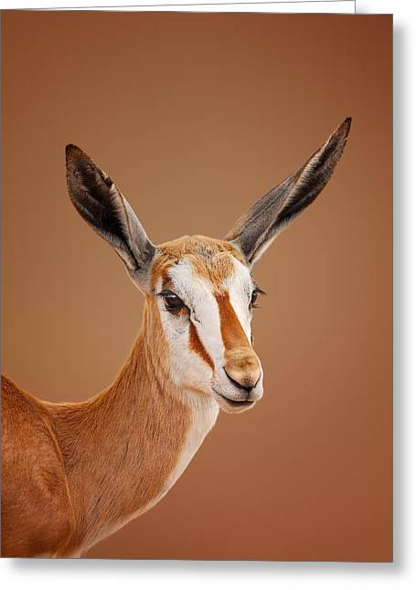 Nature Images Greeting Cards - Springbok portrait Greeting Card by Johan Swanepoel