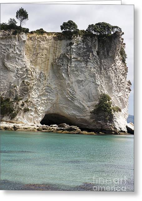 Stingray Cove Greeting Card by Himani - Printscapes