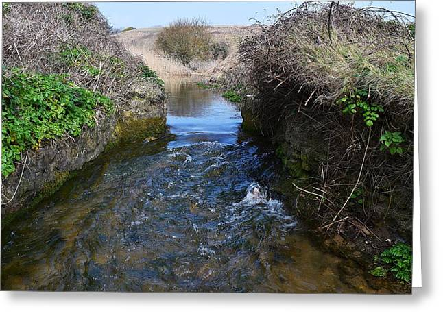 Day Lilly Greeting Cards - Stream to the Sea  Greeting Card by David G Bevan