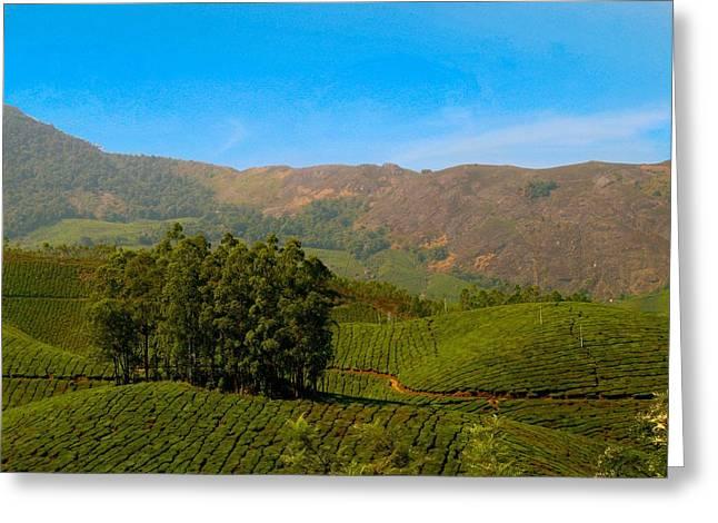 Sunlight Greeting Cards - Tea Plantation Greeting Card by Sheela Ajith