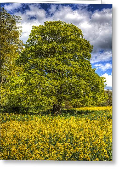 Farmers Field Greeting Cards - The Farm Tree Greeting Card by David Pyatt