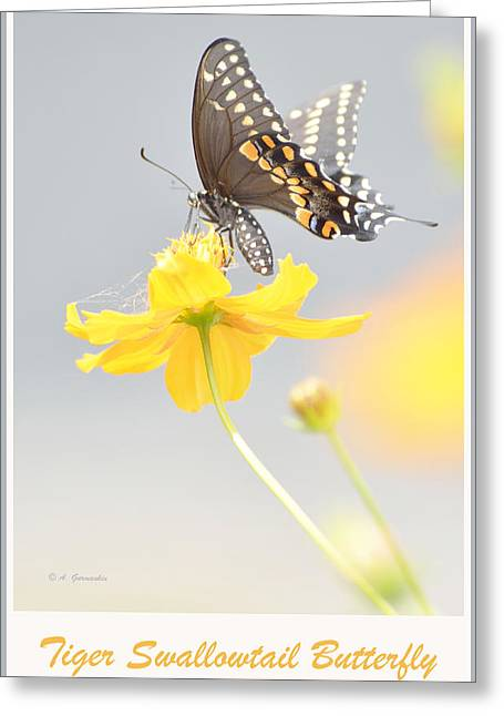Biology Greeting Cards - Tiger Swallowtail Butterfly on Cosmos Flower Greeting Card by A Gurmankin