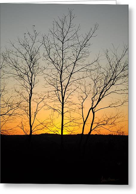 Skinny Photographs Greeting Cards - 3 Trees Greeting Card by Luke Moore