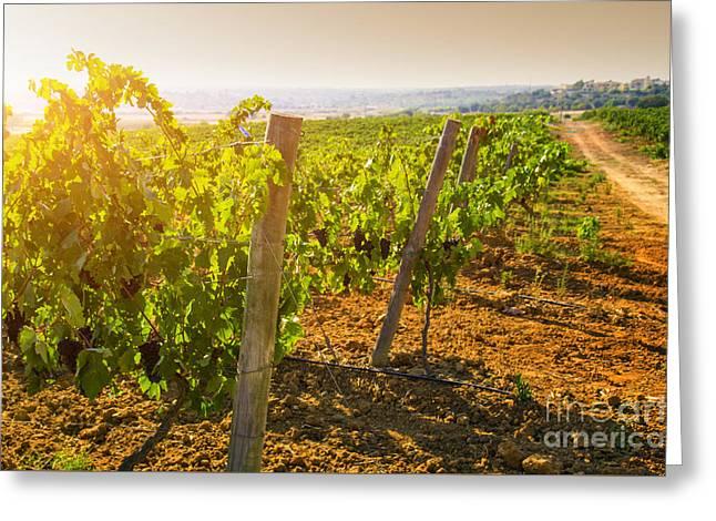 Vineyard Greeting Card by Carlos Caetano