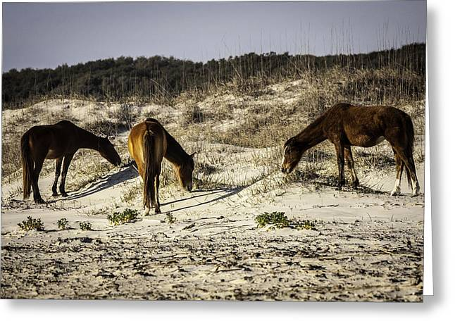 Wildlife Refuge. Greeting Cards - 3 Wild Amigos Greeting Card by Jamie Anderson