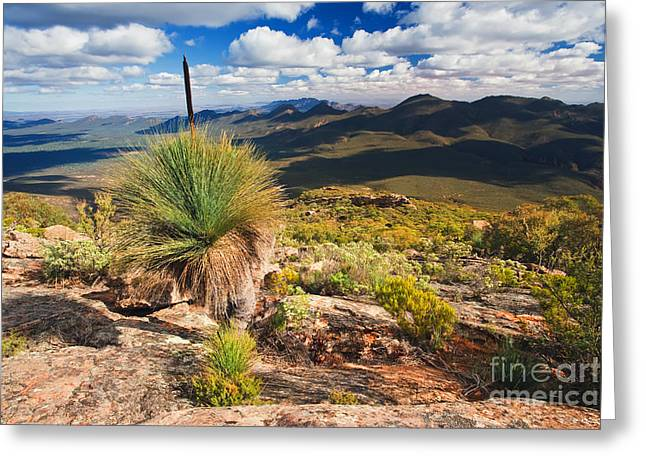 Pounds Greeting Cards - Wilpena Pound Greeting Card by Bill  Robinson