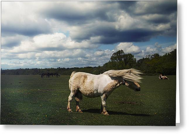 New Forest Pony Greeting Cards - Windy Day Greeting Card by Joana Kruse