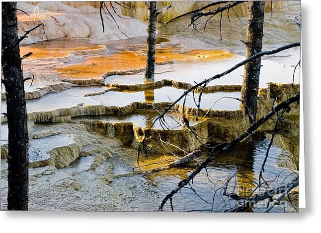 Yellowstone Greeting Card by Tara Lynn