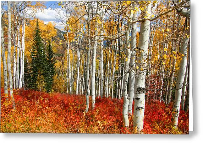 Recently Sold -  - Fall Grass Greeting Cards - Rocky Mountain Fall Greeting Card by Mark Smith