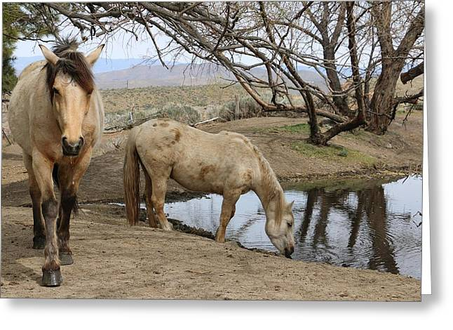 Jansson Greeting Cards - Mustangs Available For Adoption Greeting Card by Maria Jansson