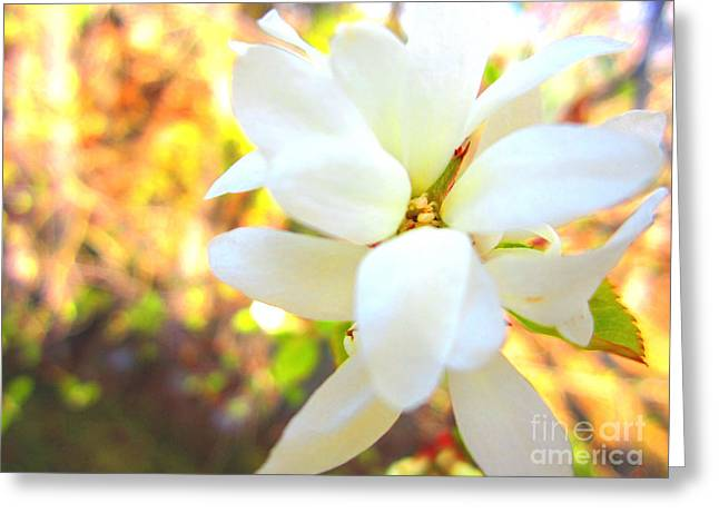3d Blossom Greeting Card by Laura Star