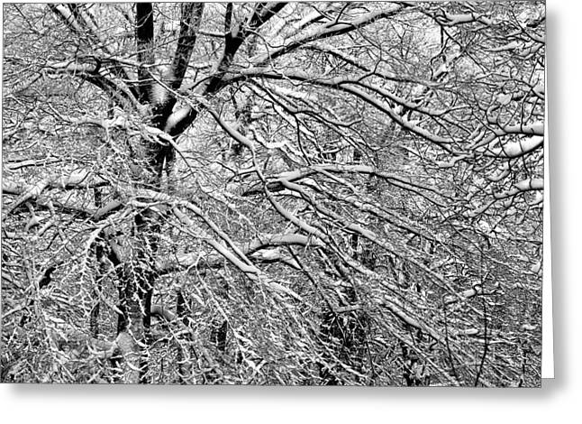 Abstractions Greeting Cards - Abstract forest in winter Greeting Card by Heinz Dieter Falkenstein