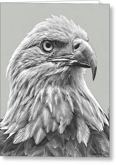 Digital Art Sketch Greeting Cards - American Bald Eagle Greeting Card by Larry Linton