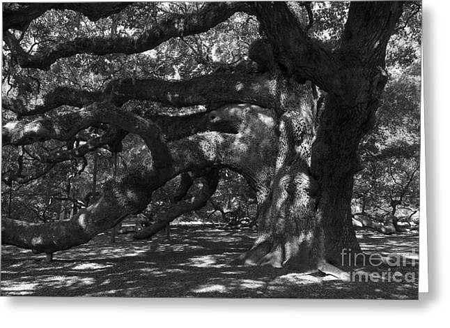 Mountain Road Greeting Cards - Angel Oak Greeting Card by Skip Willits
