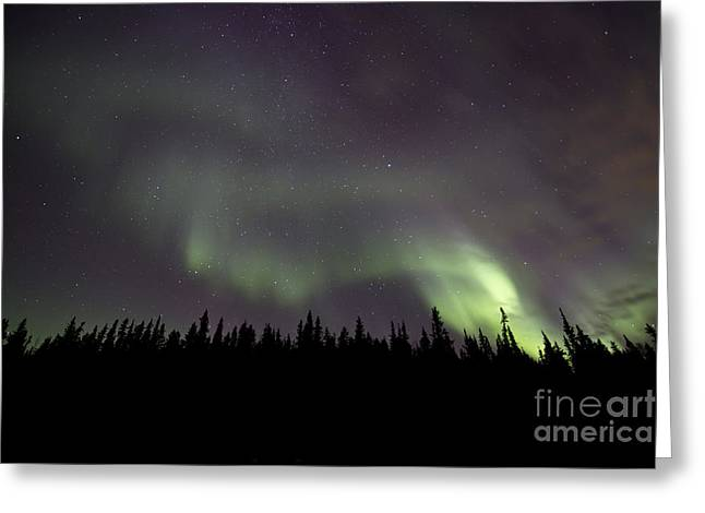 Illuminate Greeting Cards - Aurora Borealis Over Trees, Yukon Greeting Card by Jonathan Tucker