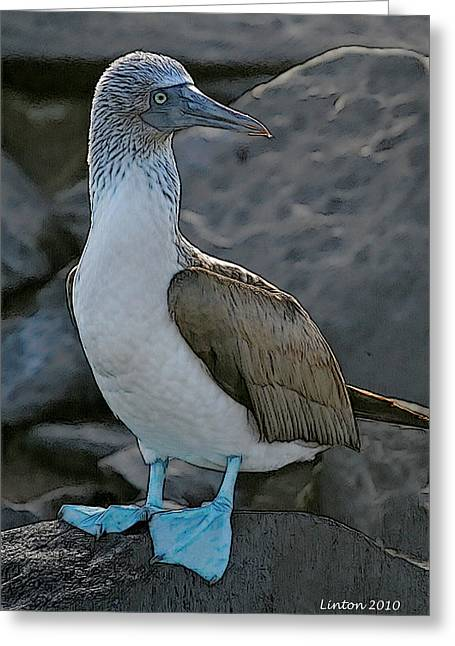 Blue-footed Booby Greeting Card by Larry Linton