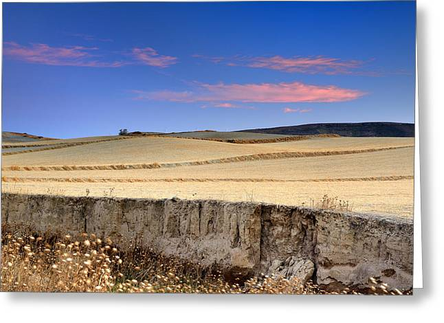 Nature Greeting Cards - Cereal fields Greeting Card by Guido Montanes Castillo