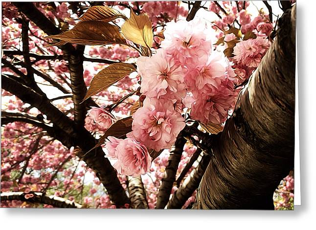 Prospects Greeting Cards - Cherry Blossoms Greeting Card by Natasha Marco