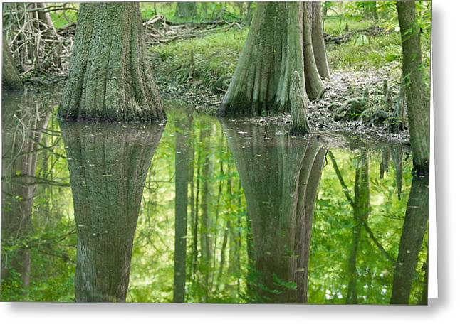 Reflecting Water Greeting Cards - cypress forest and swamp of Congaree National Park in South Caro Greeting Card by Alexandr Grichenko