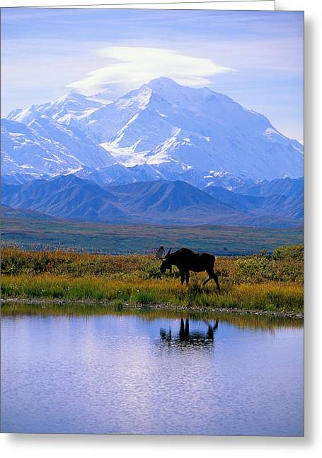 Snow Capped Photographs Greeting Cards - Denali National Park Greeting Card by John Hyde - Printscapes