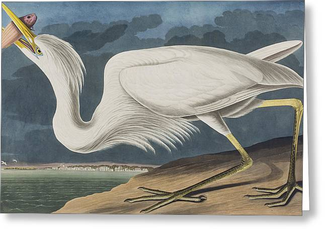 Great Drawings Greeting Cards - Great White Heron Greeting Card by John James Audubon