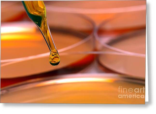 Laboratory Petri Dishes In Science Research Lab Greeting Card by Olivier Le Queinec