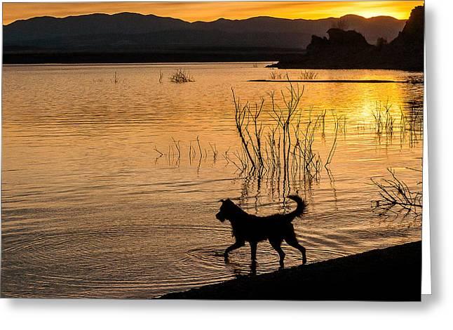 Dog In Lake Greeting Cards - 4-Legged Silhouette Greeting Card by John Bartelt