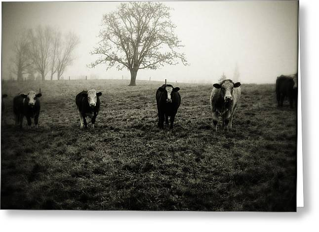 Pasture Scenes Greeting Cards - Livestock Greeting Card by Les Cunliffe