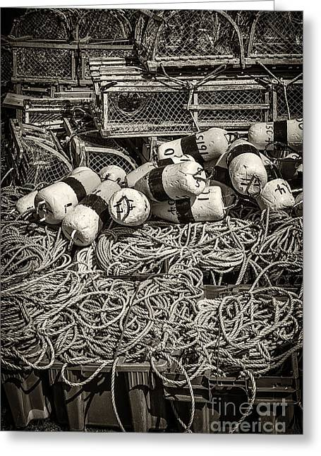 Float Greeting Cards - Lobster traps Greeting Card by Elena Elisseeva