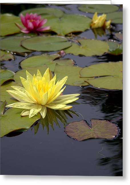 Water Lilly Greeting Cards - Mission San Juan Capistrano Gardens Greeting Card by Brad Scott