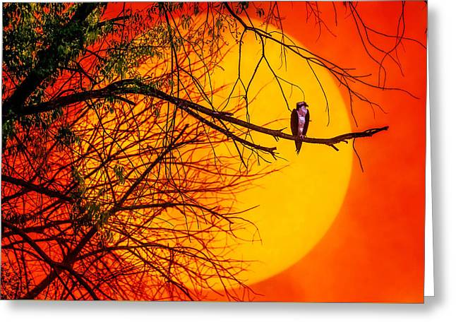 Hunting Bird Greeting Cards - Out On A Limb Greeting Card by Brian Stevens