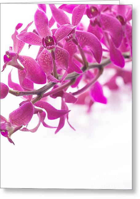 Descriptive Greeting Cards - Purple Orchid Bunch Greeting Card by Atiketta Sangasaeng