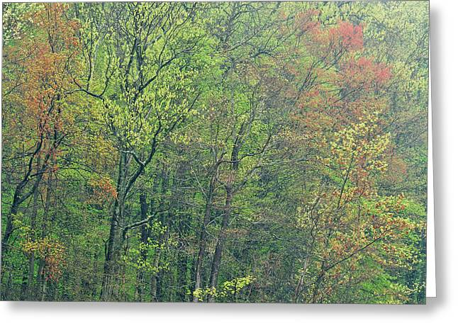 Mud Season Greeting Cards - Spring Forest in Bloom Greeting Card by Dean Pennala