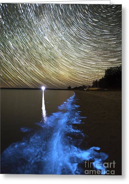 Plankton Greeting Cards - Star Trails And Bioluminescence Greeting Card by Philip Hart