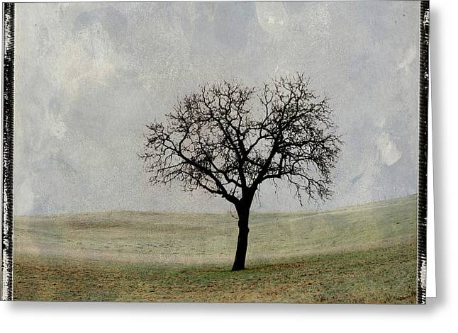 One Tree Greeting Cards - Textured tree Greeting Card by Bernard Jaubert