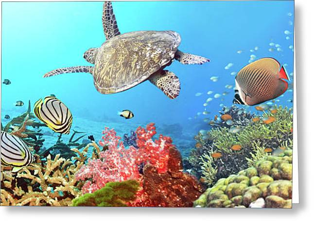 Reef Fish Photographs Greeting Cards - Underwater panorama Greeting Card by MotHaiBaPhoto Prints