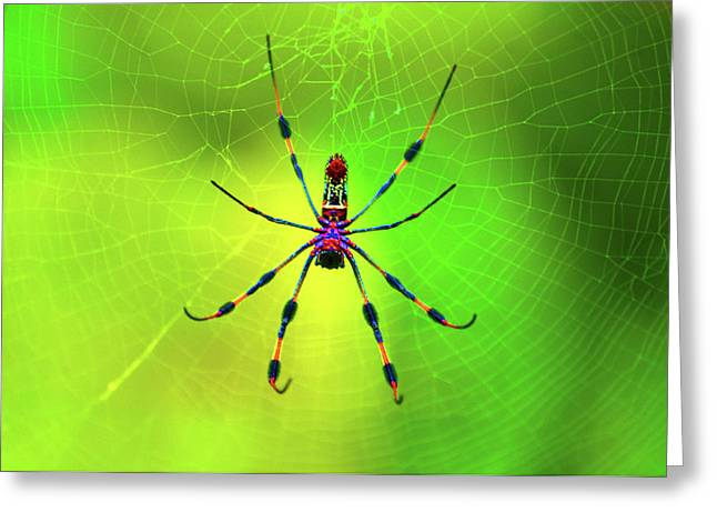 Spider Greeting Cards - 42- Come Closer Greeting Card by Joseph Keane