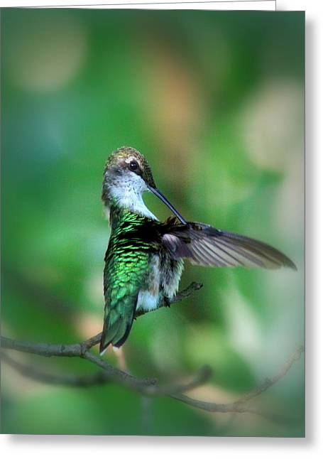 Purchase Greeting Cards - 4595-005 - Ruby-throated Hummingbird Greeting Card by Travis Truelove