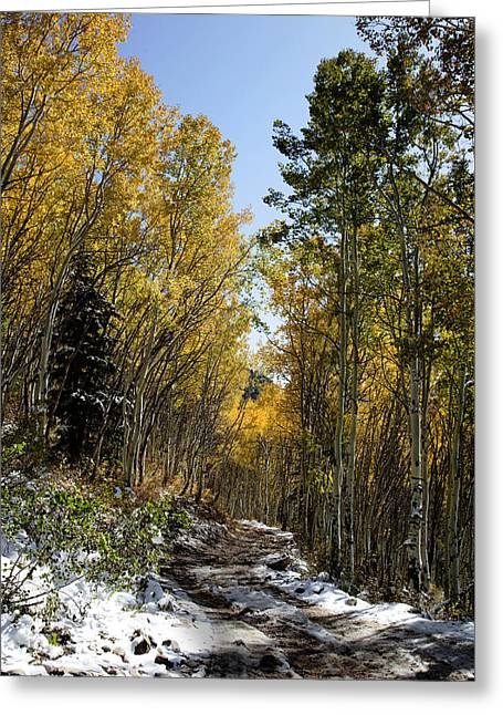 Rocky Mountain Fall Greeting Card by Mark Smith
