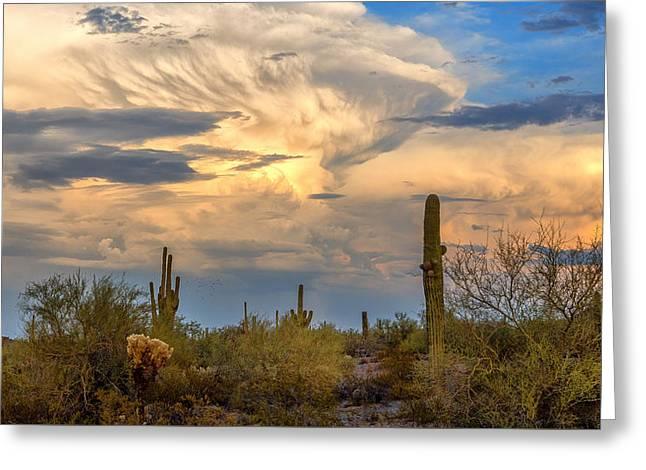 Arizona Sonoran Desert Greeting Card by Jon Berghoff