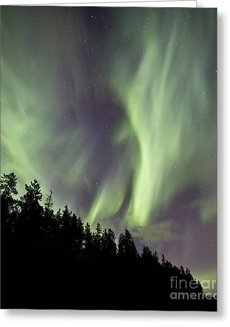 Aurora Borealis Over Trees, Yukon Greeting Card by Jonathan Tucker