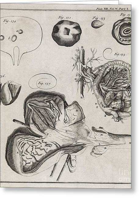 Philosophical Transactions Greeting Cards - Biological Illustrations, 18th Century Greeting Card by Middle Temple Library