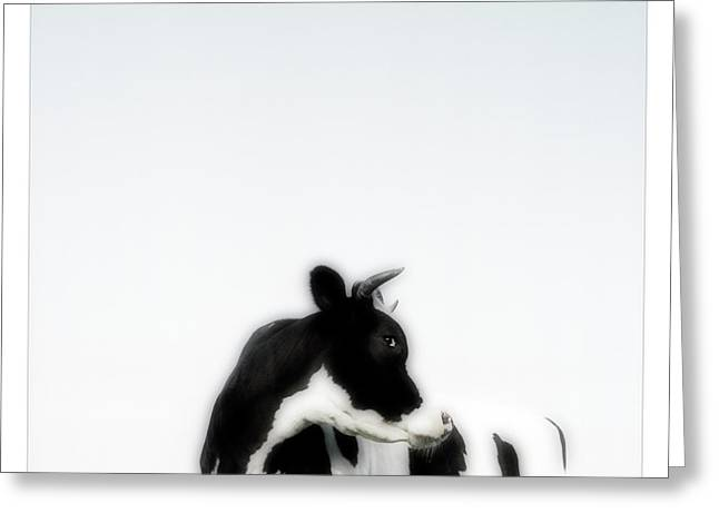 Cow Images Photographs Greeting Cards - Black And White Nature Landscape Photography Art Work Greeting Card by Marco Hietberg